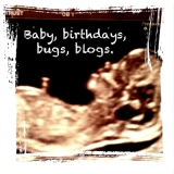 Baby, birthdays, bugs and blogs.
